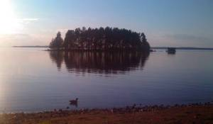 View from my campsite, with a neighboring duck